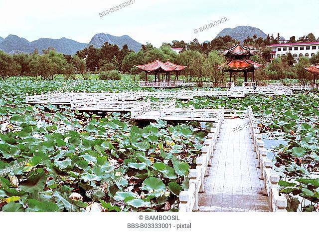 Scenery of lotus flower garden in Zhaodi, Anlong County, Guizhou Province of People's Republic of China