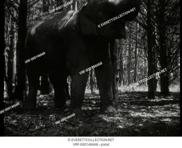 Elephant call of the wild