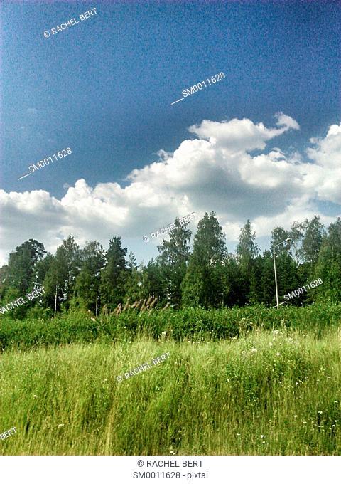 Landscape, Road to Mikkeli, Finland, Europe