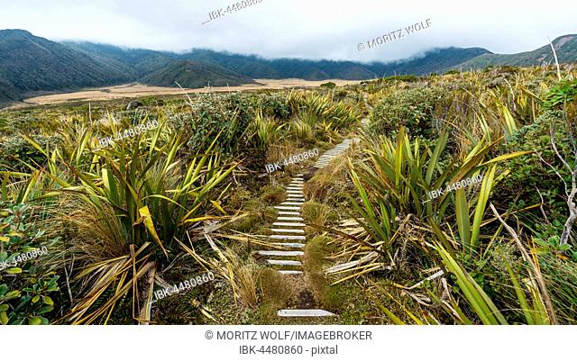 Trail through swampland, Pouakai Circuit, Egmont National Park, Taranaki, North Island, New Zealand