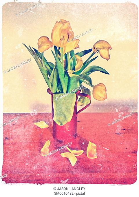 Yellow tulips in red vase, faded flowers with petals falling off