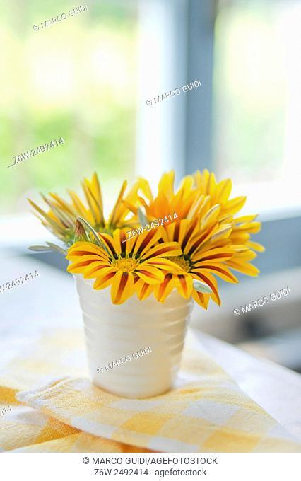 Summer flowers from the garden daisy yellow Dimorfoteca