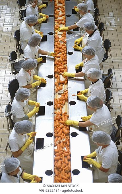 Factory workers processing carrots on a production line. Visual Inspection, prior to the production process. - 01/01/2010