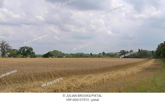 Yellow combine harvester cutting wheat - Time lapse - single row