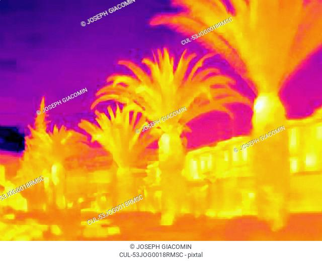 Thermal image of palm trees