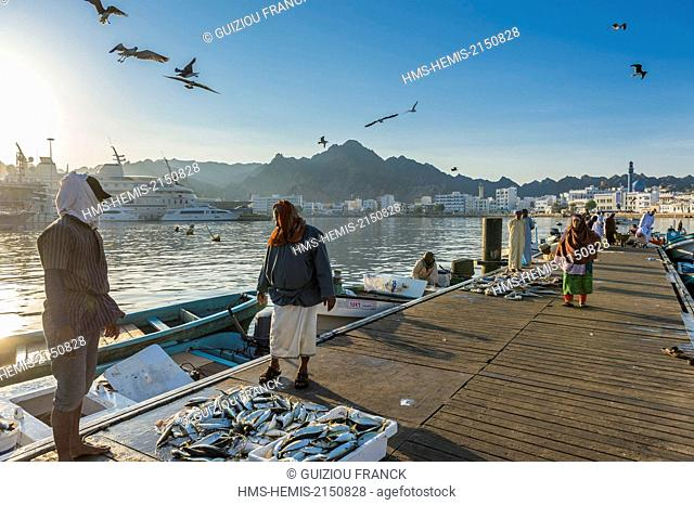 Sultanate of Oman, gouvernorate of Mascate, Muscat (or Mascate), Mutrah (or Matrah) harbour, the fish market