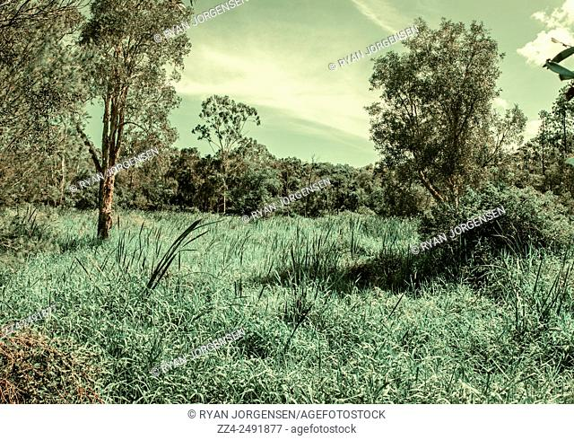 Green stylized photo of a Queensland grassland scene taken on a gusty day with grass florets swaying with the wind. Taken Deception Bay, Queensland, Australia