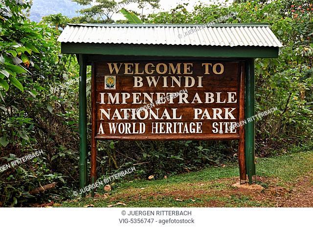 UGANDA, RUIJA, 16.02.2015, Gorilla trekking, Bwindi Impenetrable National Park, Uganda, Africa - Ruija, Uganda, 16/02/2015