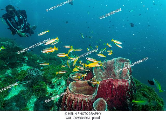 Underwater view of diver looking at coral close to Phuket, Thailand