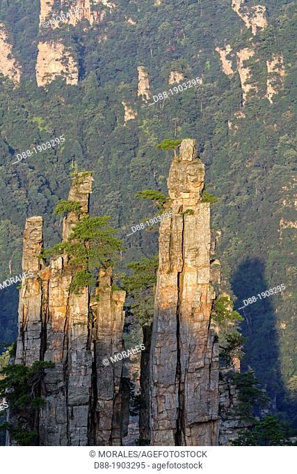 China, Hunan Province, Zhangjiajie National Forest Park UNESCO World Heritage Site, Tianzi Mountains, Imperial Writing Brush Peaks, morning