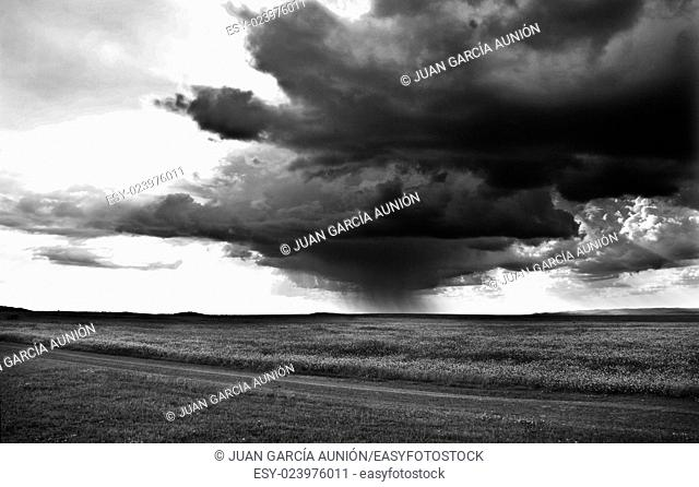 Storm Clouds over cereals fields of Badajoz, Spain