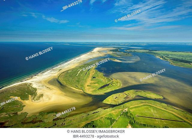 Bodden or lagoons, nature reserve, Darß-Zingst Bodden chain, Zingst, Fischland-Zingst, Baltic coast, Mecklenburg-Western Pomerania, Germany