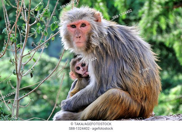 Monkey mother and baby sitting by the road