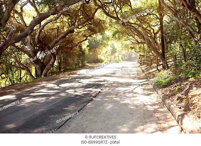 Country road with oak trees in Santa Barbara, California, USA