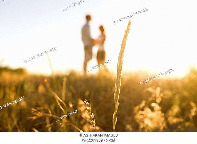 Silhouette of grass straw, couple in the background