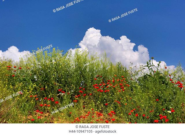Spain, Europe, Andalucia, Region, Malaga, Province, landscape, amapola, poppy, flowers, amapolas, poppies, cloud, colour, colourful, flowers, green, skyline