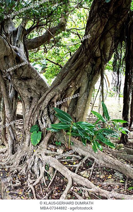 Old park of Naha on the Okinawa island of Japan