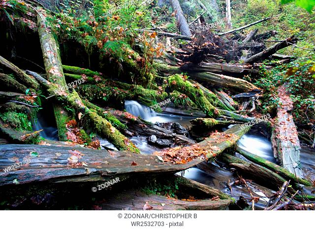 Rain Forest Stream Covered Fallen Logs Woods Jungle Outback Travel