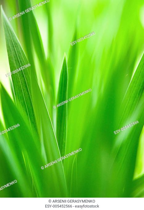 Green grass useful as nature pattern