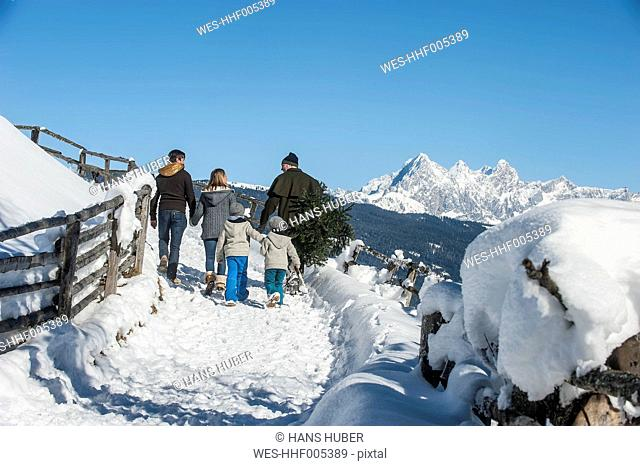 Austria, Altenmarkt-Zauchensee, man with family carrying Christmas tree in winter landscape