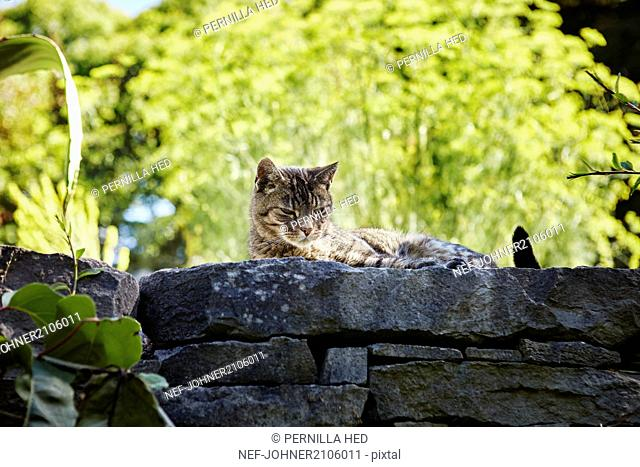 Cat on stone wall