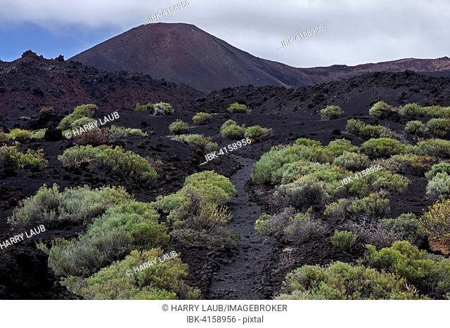 Track through the volcanic landscape with typical vegetation, the volcano de Teneguia behind, near Fuencaliente, La Palma, Canary Islands, Spain