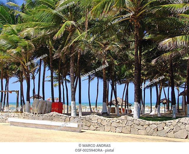 fortaleza green palm trees in a square park at the beach