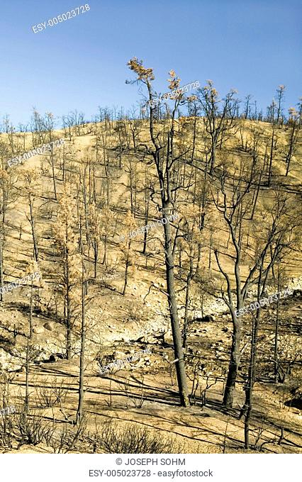 View of fire damage from Day Fire, 2006, along Lockwood Valley Road near Pine Mnt. and Frazier Park in Las Padres National Forest, Ventura County, CA
