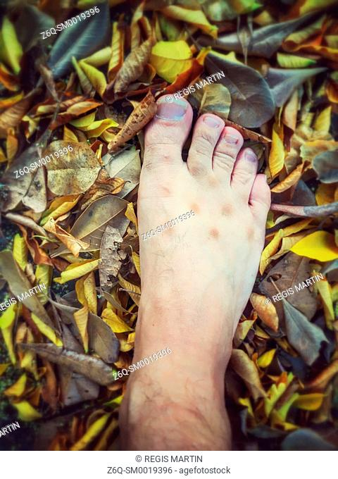 Man's foot in autumnal leaves