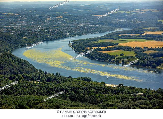 Aerial view, waterweed Elodea, Lake Baldeney, Essen, Ruhr district, North Rhine-Westphalia, Germany