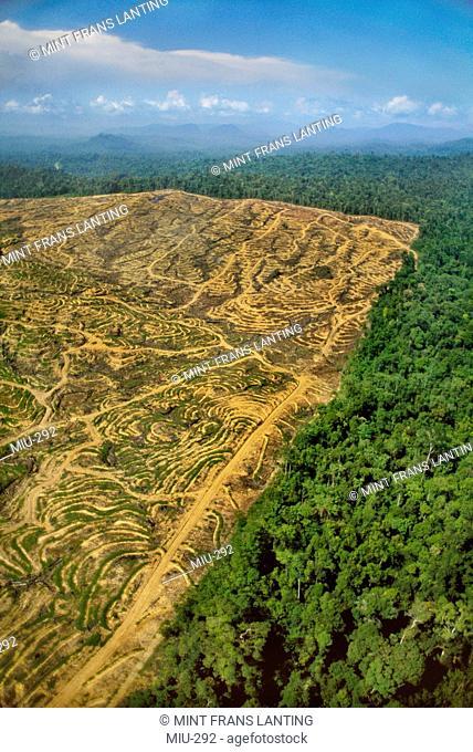 Rainforest clear-cut for oil plantation, aerial view, Sabah, Borneo