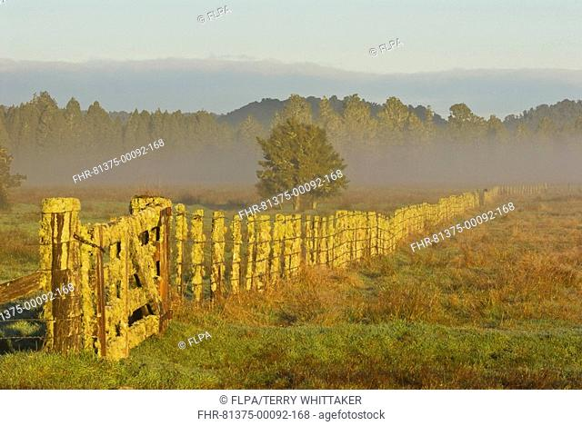 Lichen encrusted fence, misty pasture and forest, Fox Glacier, Westland N P , Southern Alps, South Island, New Zealand