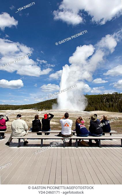 People watching the Old Faithful Geyser eruption in Yellowstone National Park, USA