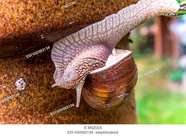 Garden snail slide on garden pillar, upside down
