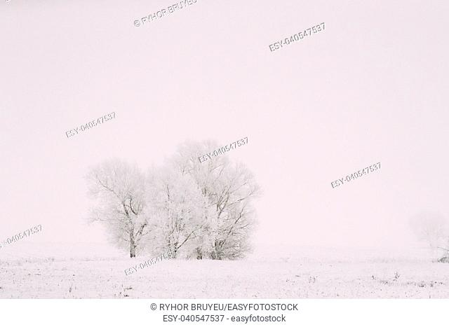 Snow-covered Field In Winter Frosty Day. Fluffy Trees In Snow. Minimalism In Winter Landscape