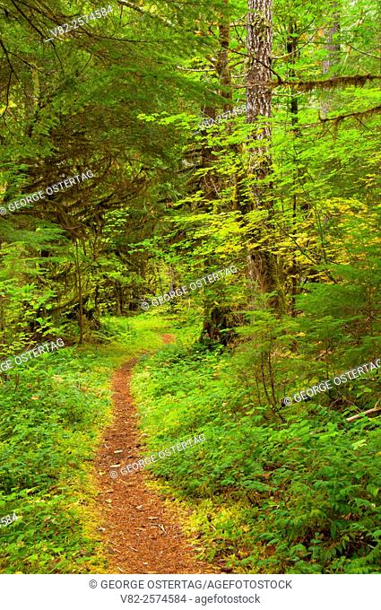Humbug Flats Trail, West Cascades Scenic Byway, Willamette National Forest, Oregon