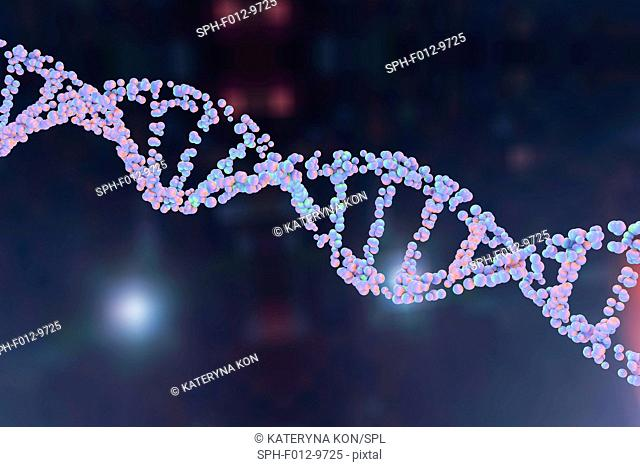 DNA molecule. Computer illustration of a double stranded DNA (deoxyribonucleic acid) molecule. DNA is composed of two strands twisted into a double helix