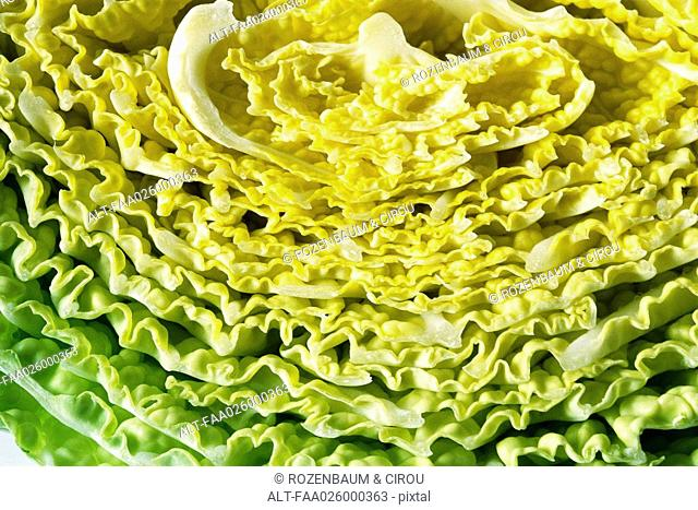 Savoy cabbage, extreme close-up, full frame