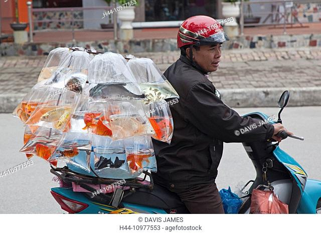 Ha Long, Hong Gai, Hon Gai, Hongay, Quang Ninh Province, Vietnam, SE Asia, South East Asia, mobile, scooter, vendor, sells, selling, goldfish, plastic bags