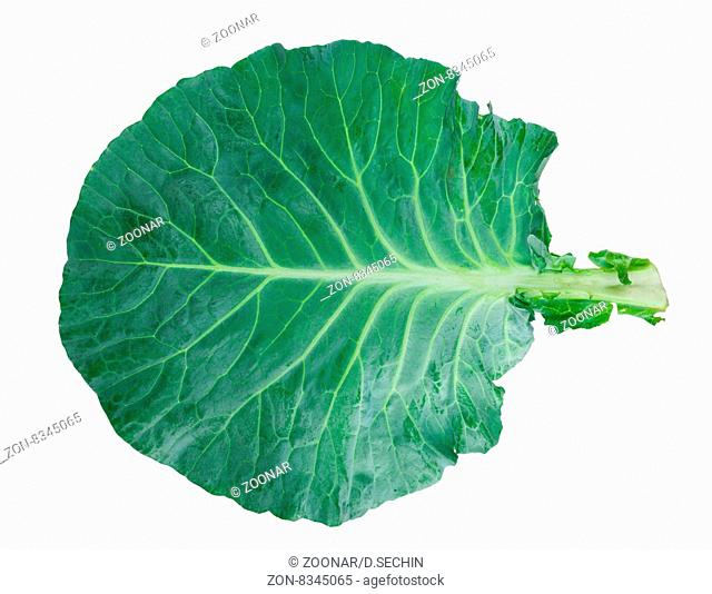 Fresh green cabbage leaf