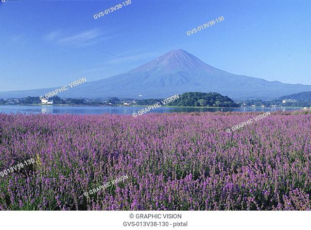 Mount Fuji, Kawaguchi Lake, Yamanashi-ken, Japan