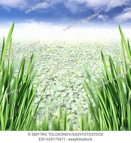 Beauty spring valley with green grass and yellow flowers