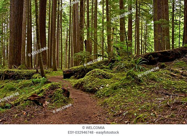 Mossy US Pacific Northwest Rainforest. Northern Oregon State Nature. Forests Photography Collection