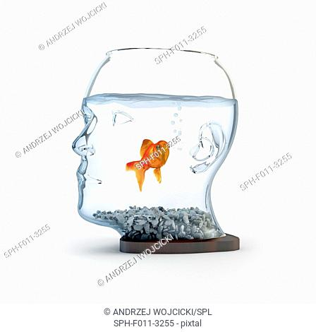 Goldfish in a bowl, conceptual illustration