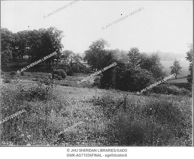 Unoccupied land near Roland Park and Guilford, the land is hilly and weeds and bushes are in the foreground, there are large groups of trees in the background