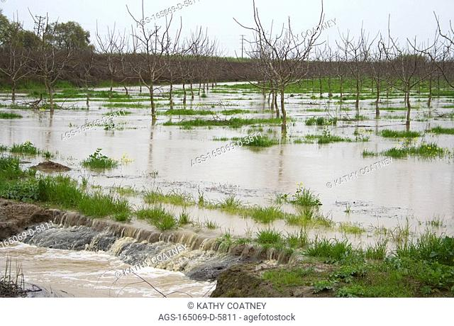 Agriculture - Dormant almond orchard in early spring flooded by excessive rain / Northern CA - Yolo County, nr. Capay