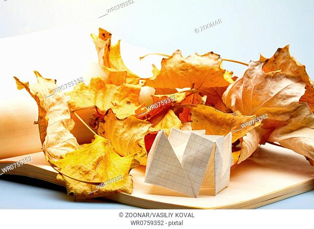origami and autumn leaves